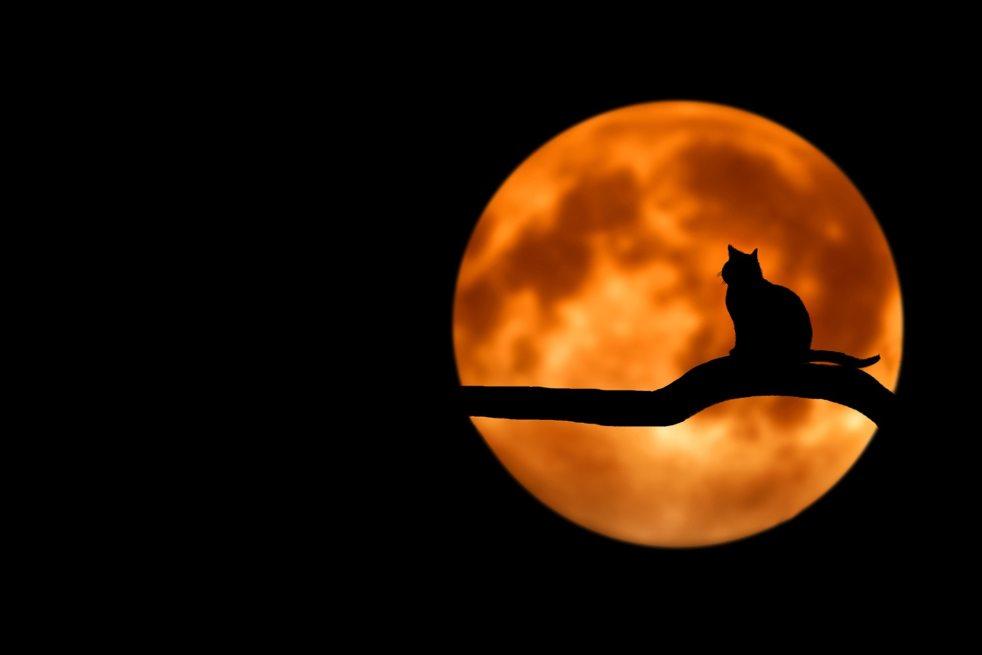 Cat Full Moon