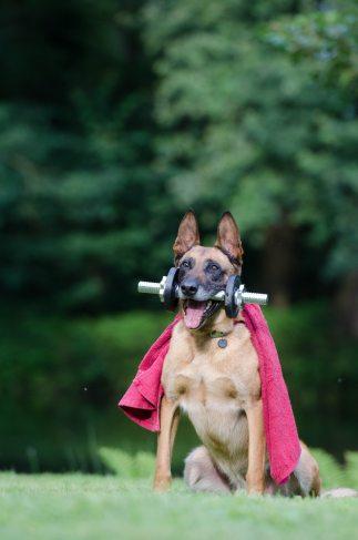 Dog Costume 1