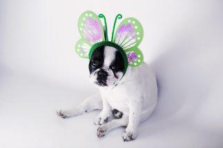 Dog Costume 3